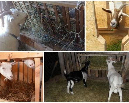 Tipos de comederos para cabras y cómo hacerlo usted mismo, instrucciones y dibujos.