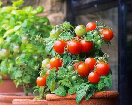 Descrierea soiului de roșii Red Robin, caracteristici de cultivare și îngrijire
