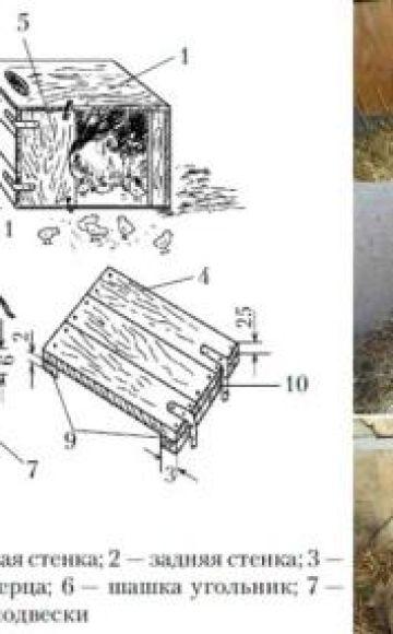 Dimensiones y dibujos de nidos para Indooks y cómo hacerlo tú mismo.