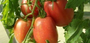 Características y descripción de la variedad de tomate Rio grande, su rendimiento
