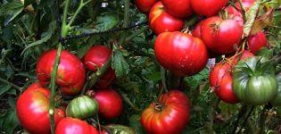Charakteristika a opis odrody paradajok Mammoth, jej výnos
