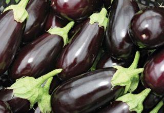 TOP 15 variedades de berenjena para un invernadero de policarbonato, cultivo y cuidado, esquema de plantación