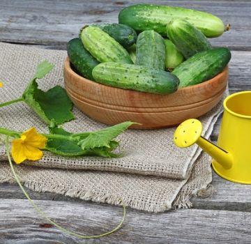 Günstige Tage zum Anpflanzen von Gurken nach dem Mondkalender im Mai 2020