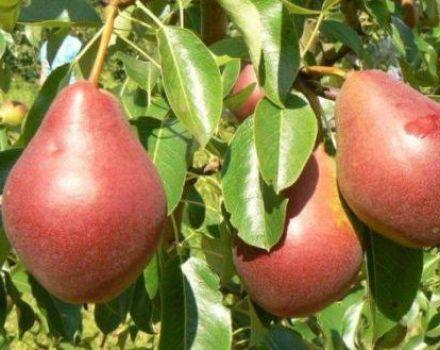 Descrierea soiurilor de pere Nadyadnaya Efimova și caracteristicile cultivării