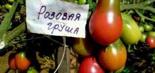 Descripción y características del tomate variedad Pera rosa