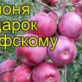 Descrierea și caracteristicile soiului de meri Cadou pentru Grafsky, reguli de plantare și îngrijire