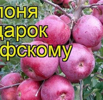 Omenapuulajikkeen kuvaus ja ominaisuudet Lahja Grafskylle, istutus- ja hoitosäännöt