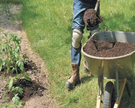 ¿Qué y cómo alimentar adecuadamente las patatas durante y antes de la floración?