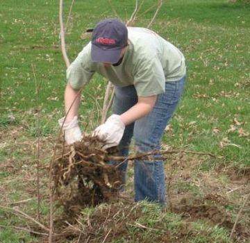 Οι καλύτερες μέθοδοι για το πώς να ξεριζώσετε τους θάμνους στον ιστότοπο στο σπίτι