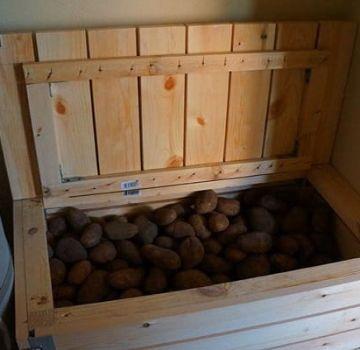 Wie man einen Rettich für den Winter zu Hause in einem Keller oder einer Wohnung aufbewahrt, kann man einfrieren