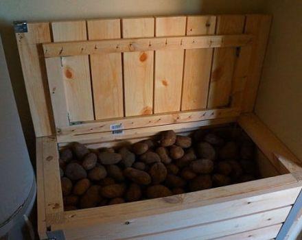 Ako udržať reďkev na zimu doma v pivnici alebo byte, je možné zmraziť