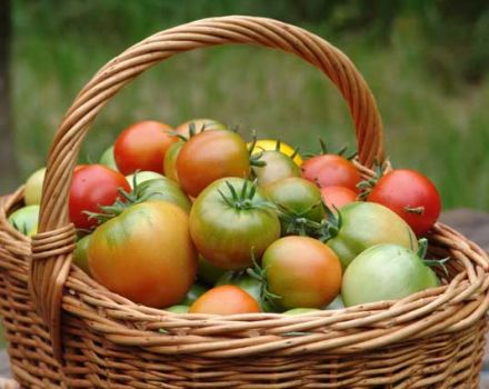 Kenmerken en beschrijving van de tomatensoort Zilverspar