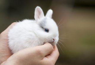 Reglas para el cuidado y mantenimiento de conejos enanos en casa.
