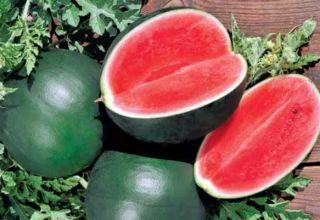 Περιγραφή της ποικιλίας καρπουζιού Ogonyok, η καλλιέργειά της σε ανοιχτό έδαφος και σε θερμοκήπιο, ωριμάζοντας όρους