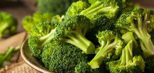 Einfache Rezepte für die Zubereitung von Brokkoli-Rohlingen für den Winter zu Hause