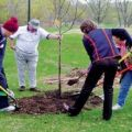 Hogyan lehet takarmányozni egy fiatal és felnőtt almafát tavasszal, nyáron és ősszel az érés és a termés során