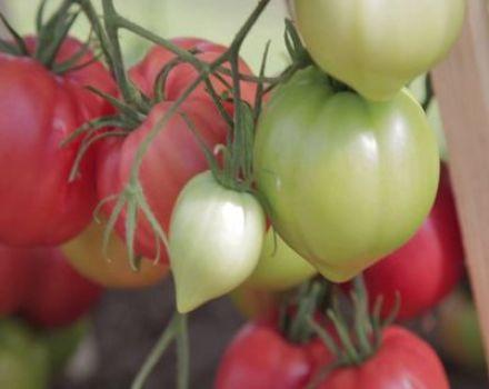 Características y descripción de la variedad de tomate Raspberry Empire, su rendimiento