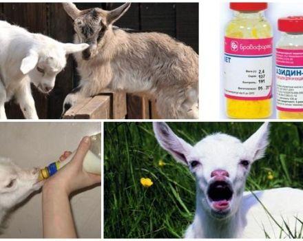 Síntomas de enfermedades en niños y métodos de tratamiento, métodos de prevención.