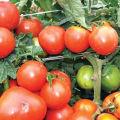 Charakteristika a opis odrody rajčiaka kráľa kráľa, jeho výnos