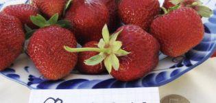 Descripción y características de la variedad, cultivo y reproducción de la fresa Florence.