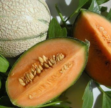 Waarom kunnen meloenen oranje vruchtvlees hebben van binnen, wat voor soort zijn dat?
