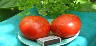 Descripción de la variedad de tomate Fireworks, sus características y características de cultivo.