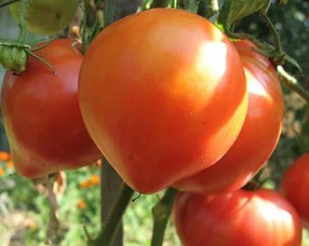 Caracteristicile și descrierea soiului de tomate roz Abakansky, randamentul său