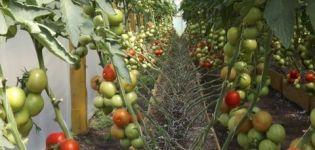 Caracteristicile și descrierea soiurilor de roșii non picante