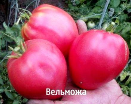 Grandee-tomaattilajikkeen ja sen saannon ominaisuudet ja kuvaus