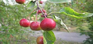 Descriere și caracteristici, caracteristici de cultivare și regiuni pentru soiurile de mere Un cadou pentru grădinari