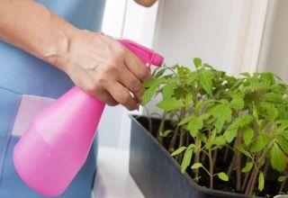 Súper agente para plántulas de tomate peróxido de hidrógeno