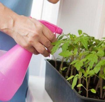 Szuper szer a paradicsom palántákhoz hidrogén-peroxid
