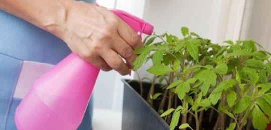 Σούπερ παράγοντας για το σπορόφυτο το υπεροξείδιο του υδρογόνου