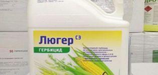 A Luger herbicid felhasználási útmutatója, a hatásmechanizmus és a fogyasztás mértéke