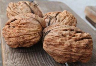 Cómo cultivar nueces en la región de Moscú, las mejores variedades, plantación y cuidado.