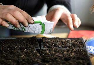 ¿Cuál es la vida útil de las semillas de tomate y cuántos años siguen siendo viables?