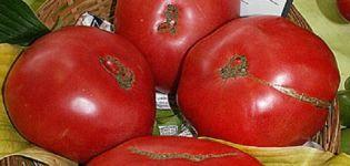 Kuvaus tomaattilajikkeesta Boyarynya F1, viljelyyn ja hoitoon liittyvät piirteet