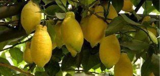 Popis citróna Lunario a vlastnosti domácej starostlivosti