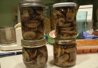 Receptek, hogyan sózzuk a nyirkos gombákat télen tégelyekbe meleg és hideg módon