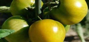 Beschrijving van het tomatenras Amber 530, opbrengst en kenmerken
