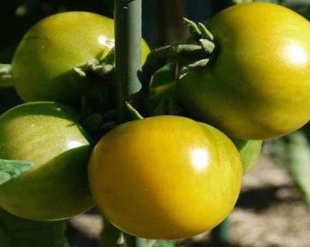 Opis odrody paradajok Amber 530, výnos a vlastnosti