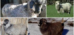 Descripción y características de las cabras de raza Don, manteniendo las reglas.