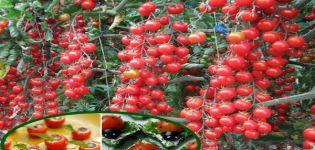 Descripción de la variedad de tomate Magic Cascade y sus características