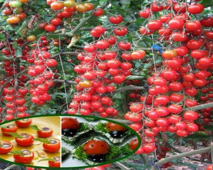 Opis odrody paradajok Magic Cascade a jej vlastnosti