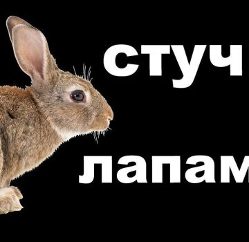 Por qué los conejos a veces golpean sus patas traseras y cómo eliminar las causas