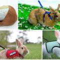 Tipos de arneses para conejos y cómo hacerlo tú mismo, cómo caminar.