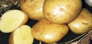 Descripción de la variedad de papa Gulliver, características de cultivo y rendimiento.