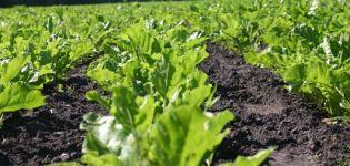 Tipos de preparaciones y uso de herbicidas para procesar remolacha