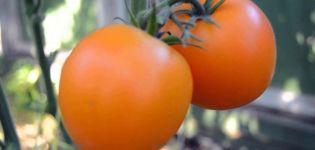 Características y descripción de la variedad de tomate mandarinka, su rendimiento