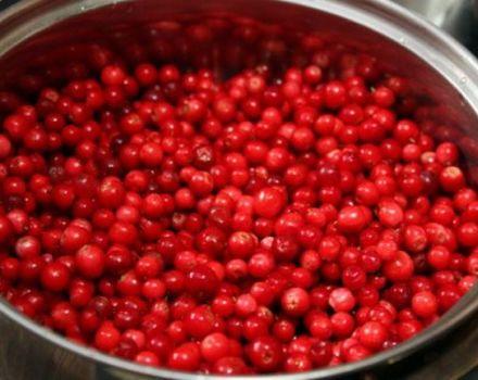 Cómo mantener arándanos rojos para el invierno en casa.